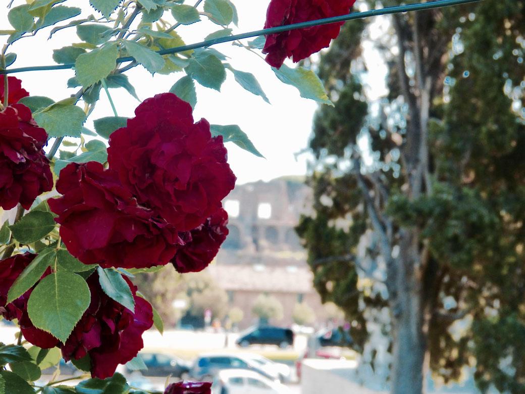Der Frühling in Rom - Am 21. April, pünktlich zum Geburtstag von Rom, öffnet der Rosengarten