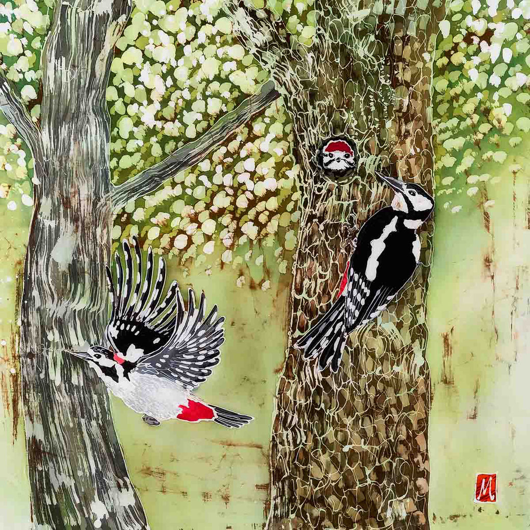 Great Spotted Woodpecker english garden bird lover fine art print twitcher birder