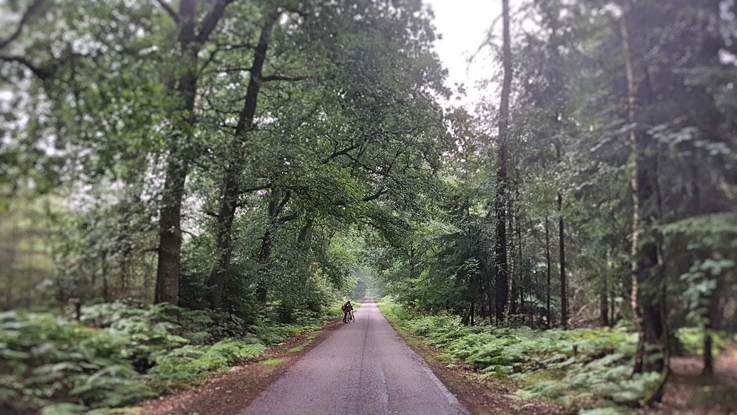 Stille Landschaften - im Dämmerwald