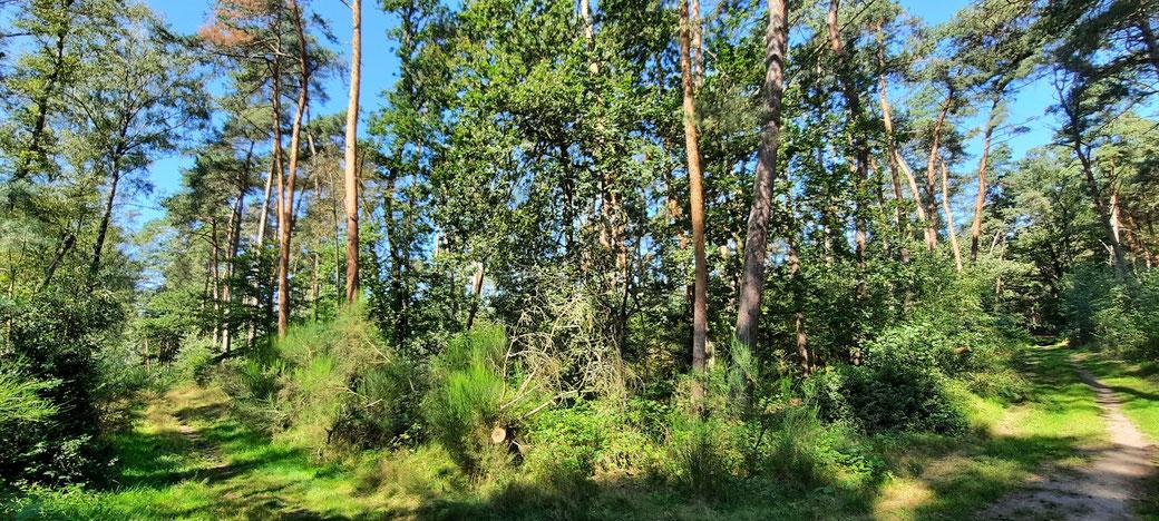 Verträumte Waldpfade mit teils mediterran anmutenden Kiefernwaldbeständen