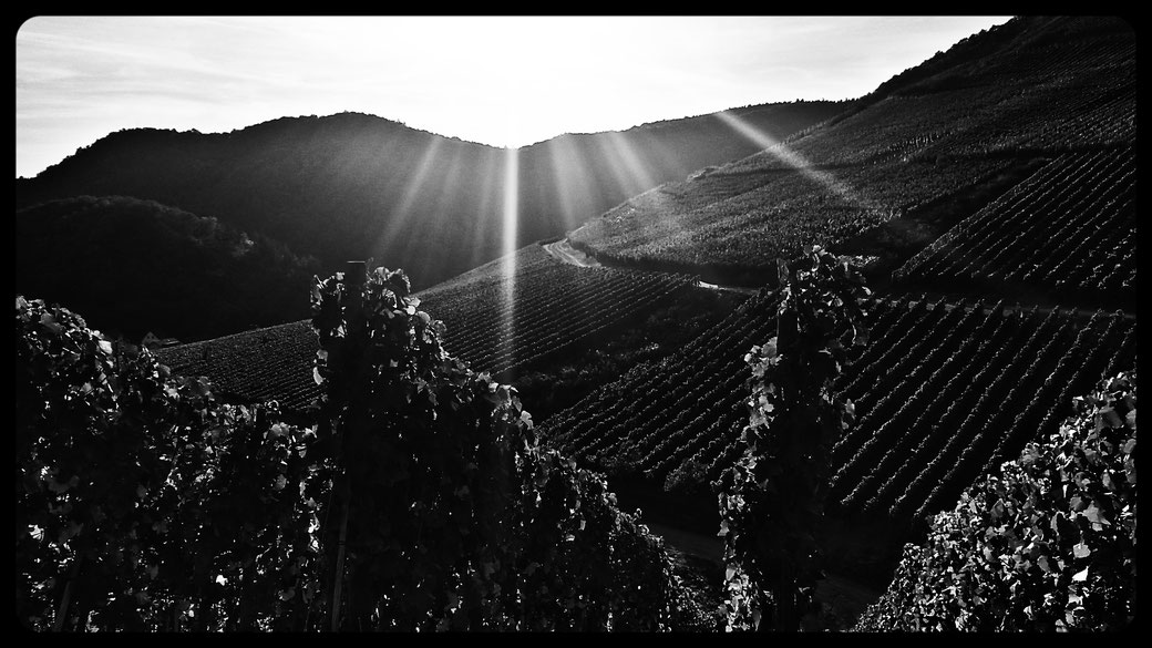 Vine-art  in black and white