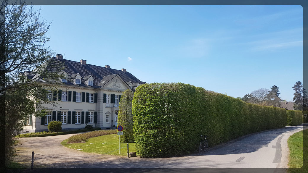 Inmitten von Rapsfeldern gelegen: Schloss Laach
