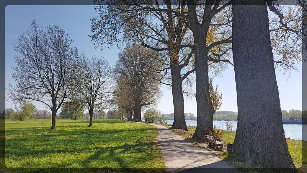 Unterwegs auf dem Rheinradweg, durch den Rheinpark bei Leverkusen-Hitdorf