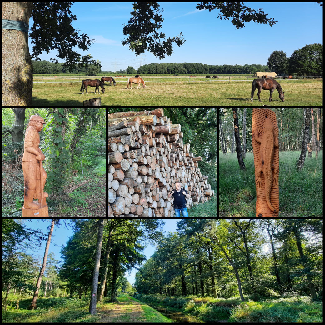 """Noch einige Impressionen u.a. mit Skulpturen vom Kettensägenkünstler  """"crazy george""""  zum Abschluss des Wandertages"""