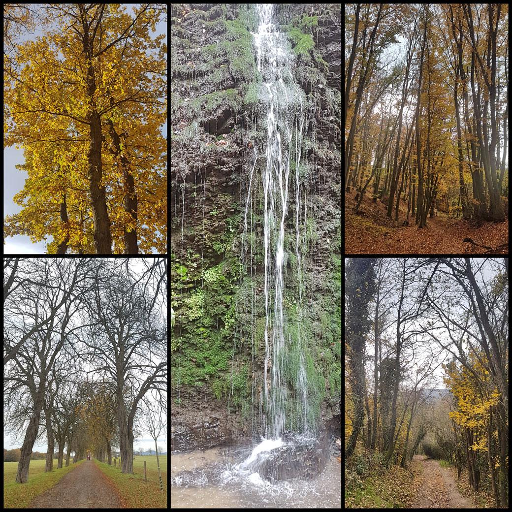 Streckenimpressionen meiner Etappe des Rheinsteigs. Buchenwald, Hochebene, Wasserfall des Hähnerbachs bei Unkel, Licht im letzten Herbstlaub