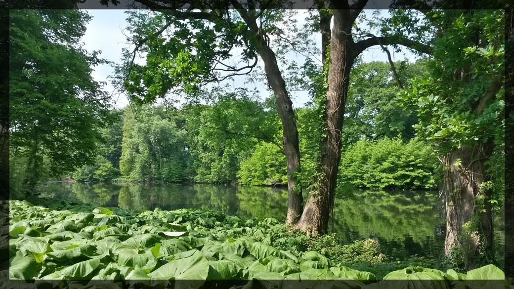 Ausblicke im Park über den Altstromarm