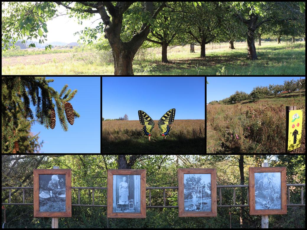 Kleine Collage vom Kirschwanderweg 3 - wie schön muss es hier während der Blüte sein?!