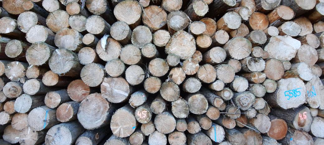 Forst-und Holzwirtschaft