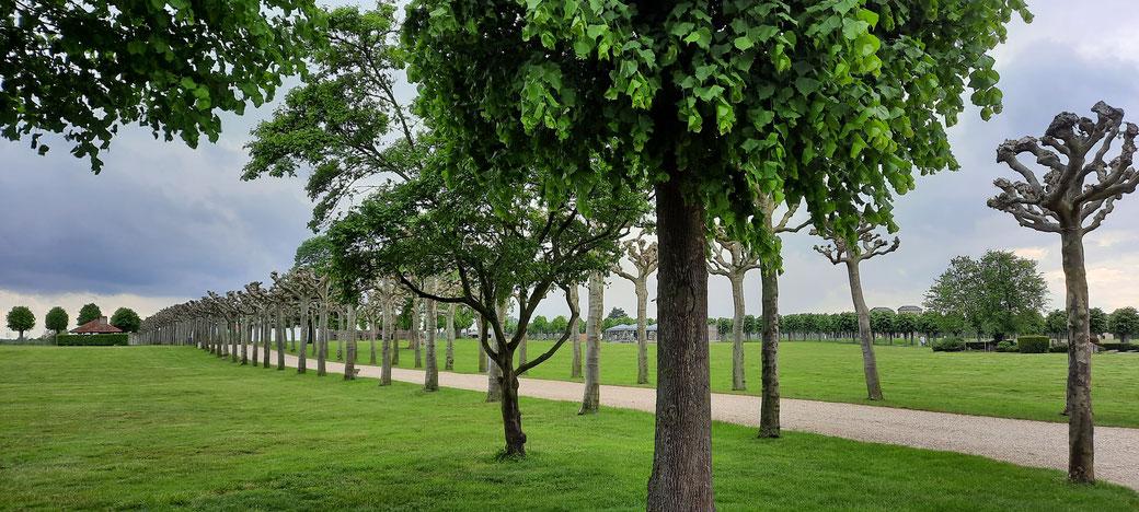 Stille und schier endloses grün-Platanenallee im Römerpark