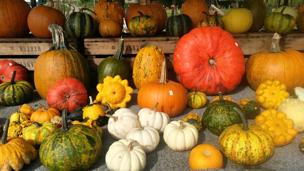 Der Herbst ist gekommen - Kürbiss- Ausstellung auf der aktuellen Tour