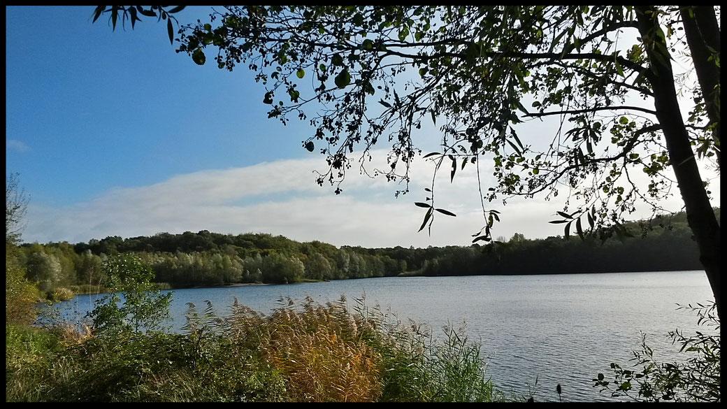 Herbstliche Stimmung am Waldsee