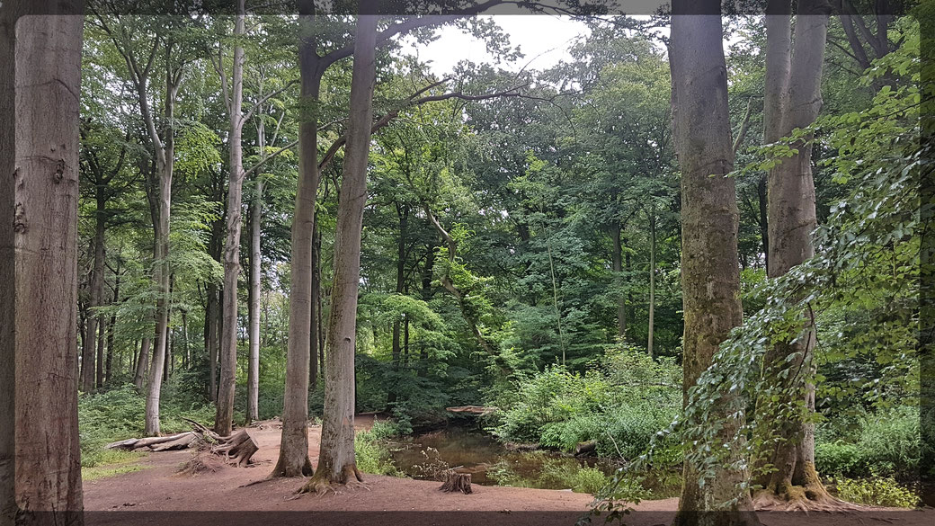 Urwüchsig unterwegs am Rotbach im Wohnungswald bei Voerde