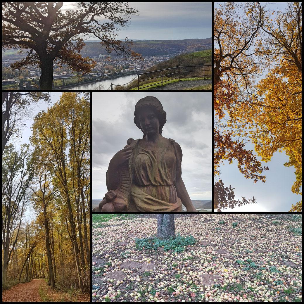 Buchenwald, Sonnenlicht im letzten Herbstlaub, Erpeler Ley, Fallobst, Figur an der Burg Ockenfels