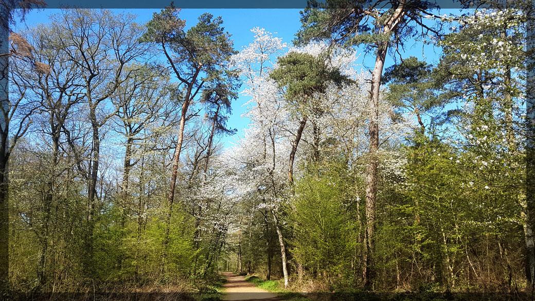 Frühlingsimpressionen aus dem Knipprather Wald bei Monheim