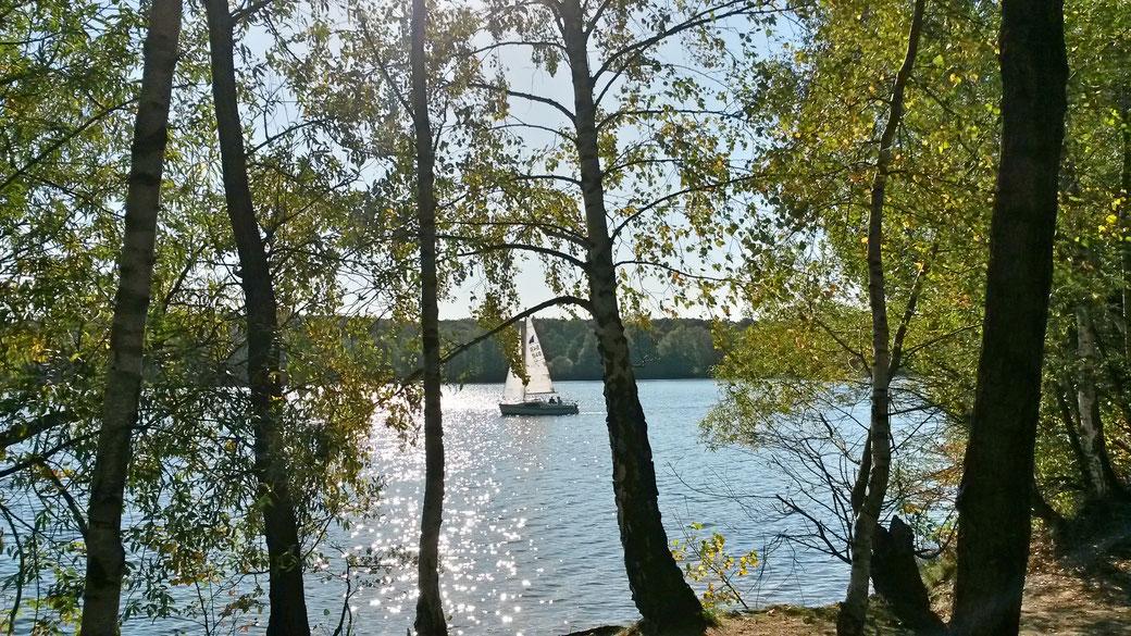 Birkenwald und Freizeitskipper