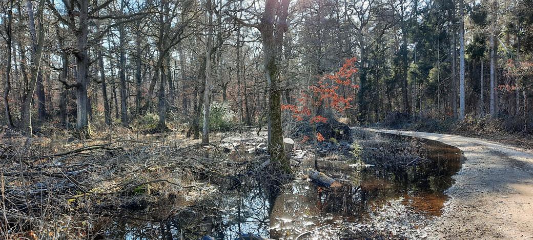 Befestigte Wege durch morastigen Wald. Dies ist wohl nur der starken Regenfälle der vergangenen Woche geschuldet.