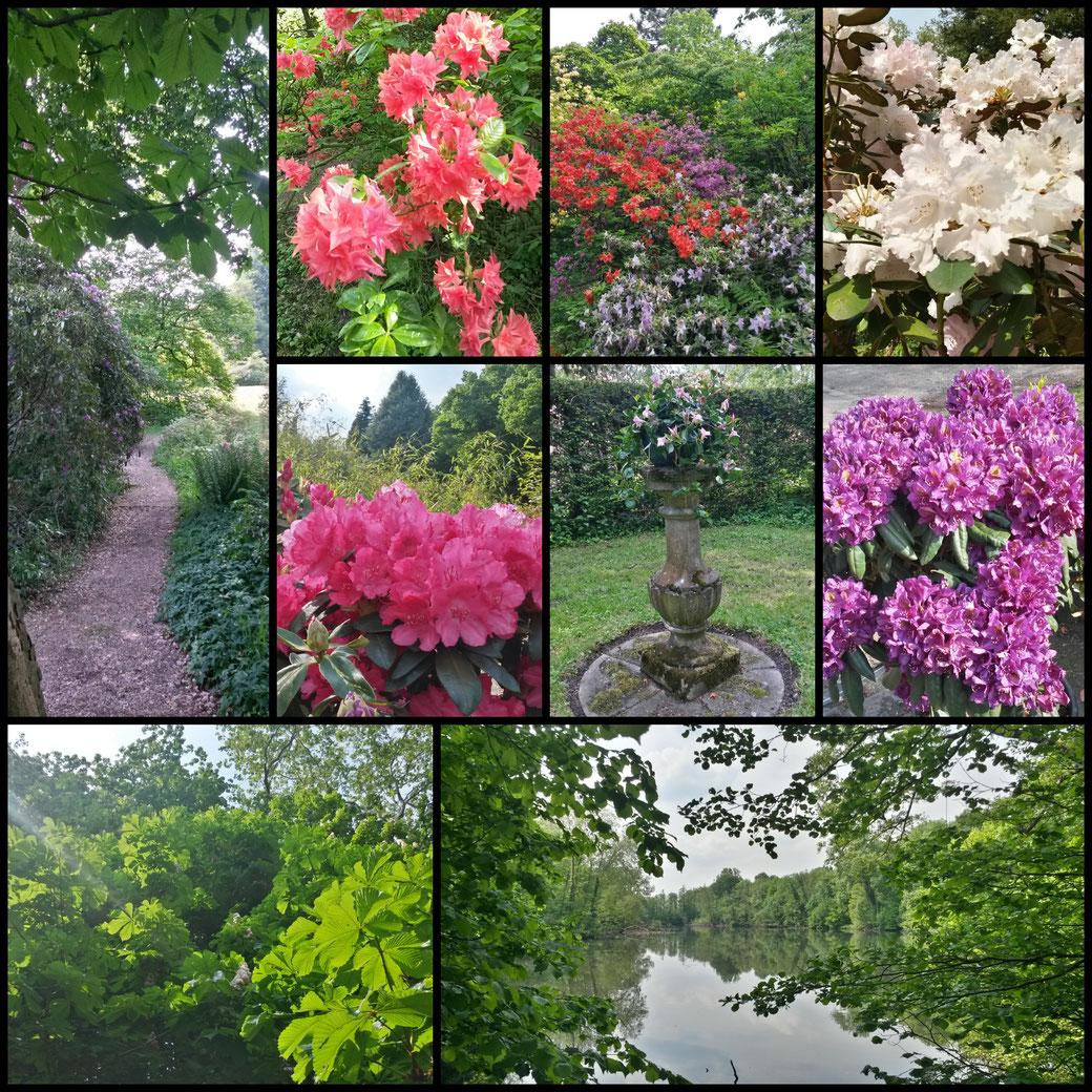 Rhododendron - und Azaleenblüte im Heilmannshof - ein Träumchen!
