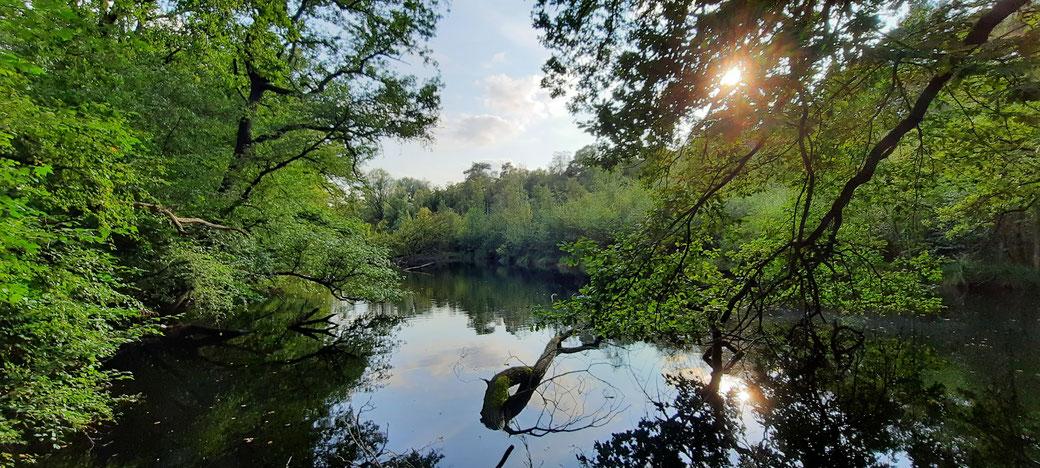 Einsamer stiller Waldweiher im Dämmerwald