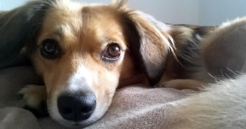 Blog die richtige Auswahl des Fressnapfes für den Hund