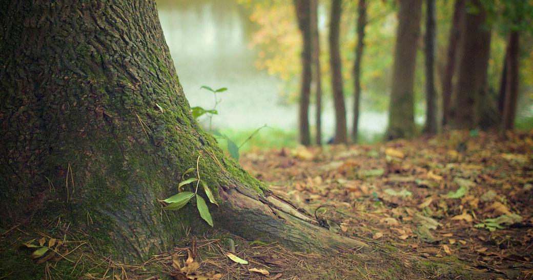 Blog Waldbaden