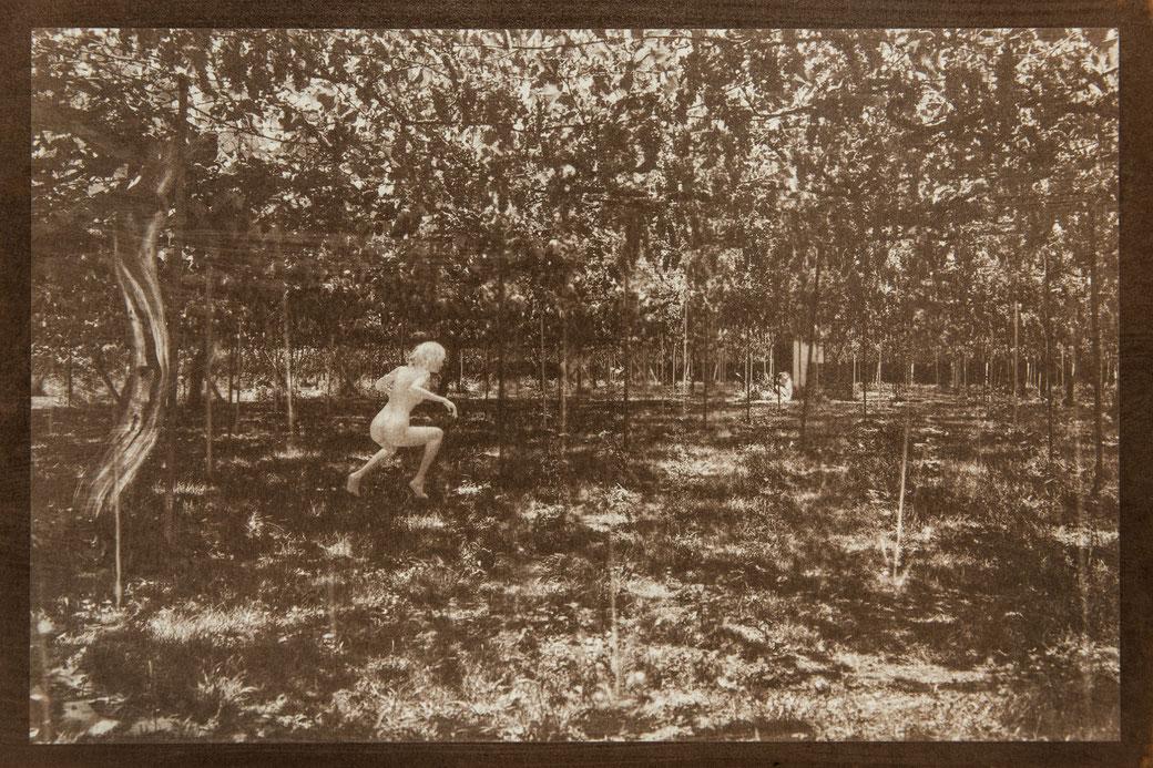 無花果花影『水と葡萄の間』  - PHOTO WORK - 氷森記心 - KISHIN HIMORI -