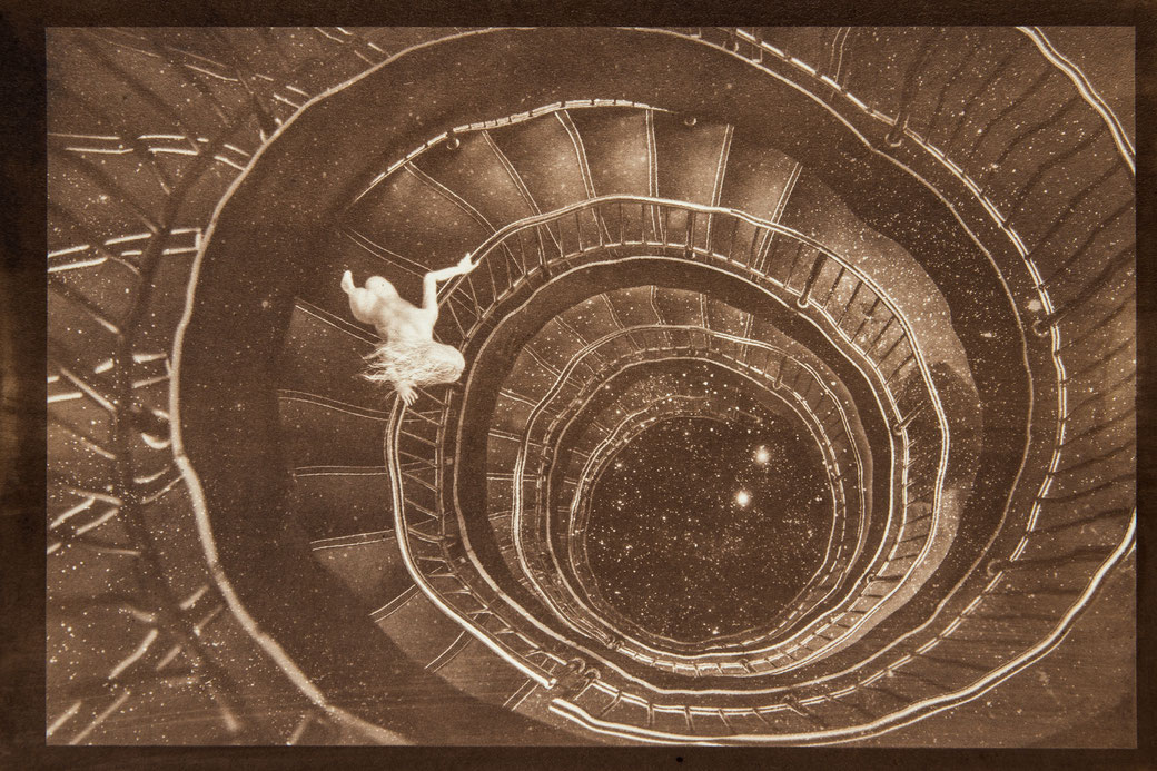 無花果花影『常磐螺旋』  - PHOTO WORK - 氷森記心 - KISHIN HIMORI -