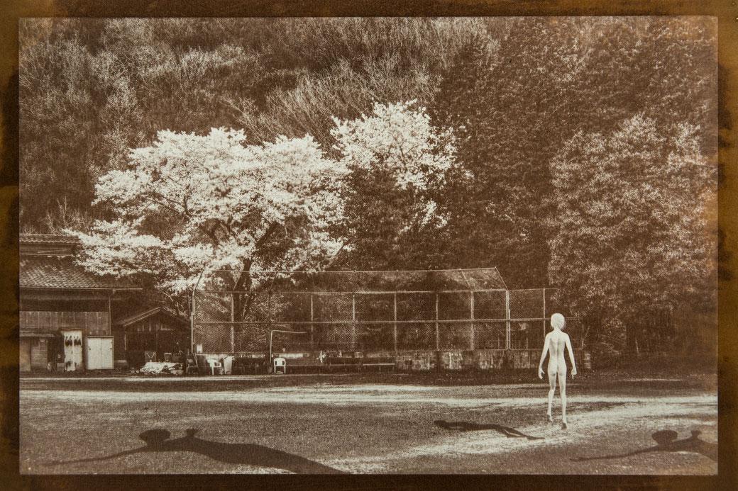 無花果花影『春に謎』 - PHOTO WORK  - 氷森記心 - KISHIN HIMORI -