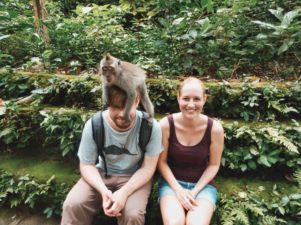 Affe im Affenwald Ubud sitzt Mann auf dem Kopf.