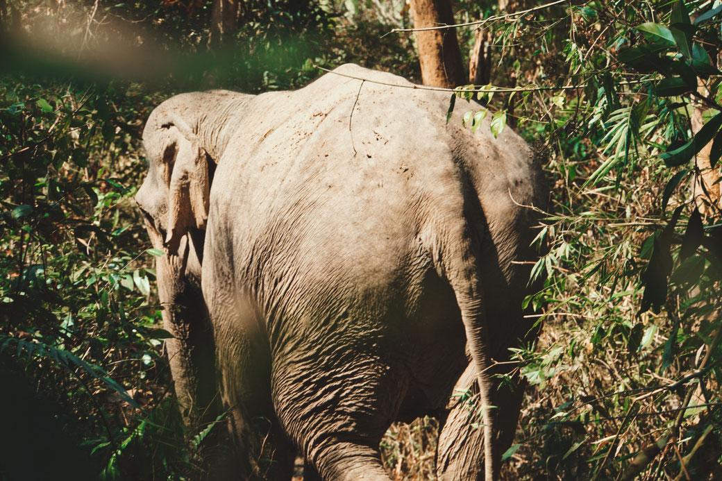 Eine elefantendame läuft durch den Dschungel