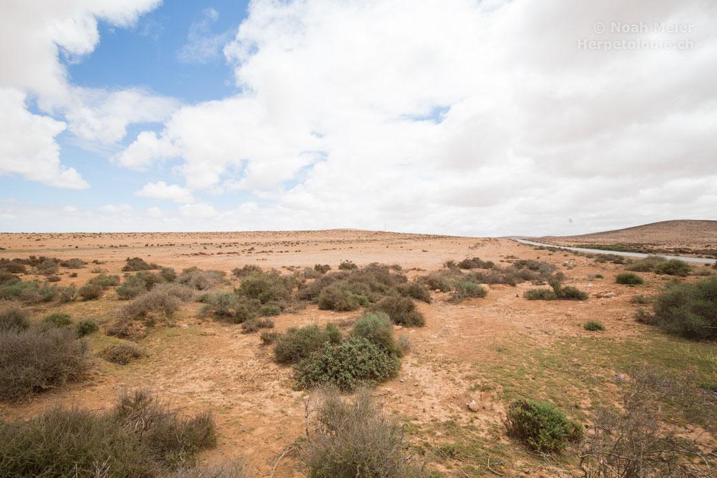 Landschaft nahe von Massa, Habitat von Chamaeleo chamaeleon, Testudo graeca und diversen Skorpionarten