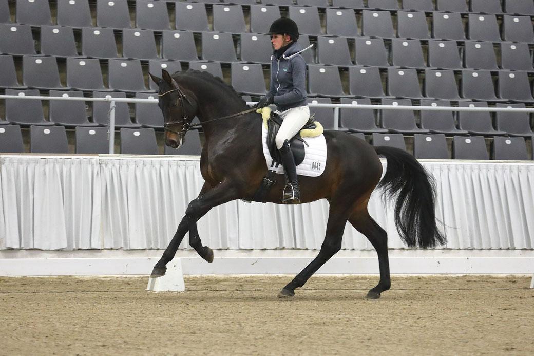 Rhenium & Paula de Boer beim Sporttest für Dressurhengste in Verden.