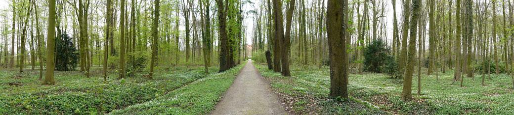 Parkweg nach Burg Hülshoff.  Die Buschwindröschen blühen und es riecht nach Frühling.