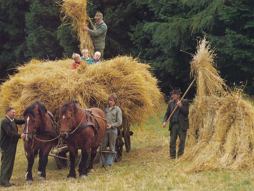 Bei der Getreideernte 1988: Theo Melcher, Bremscheid (links), Ferdi Becker, Sieperting (auf dem Wagen) und Antonius Fischer, Isingheim (rechts)