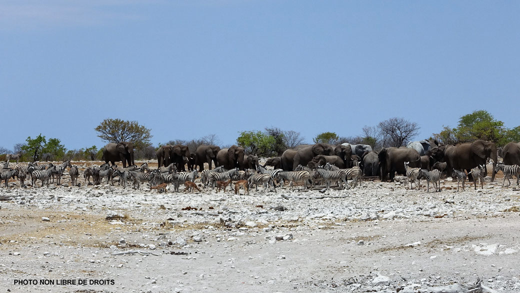 Bar des animaux, ETOSHA, photo non libre de droits
