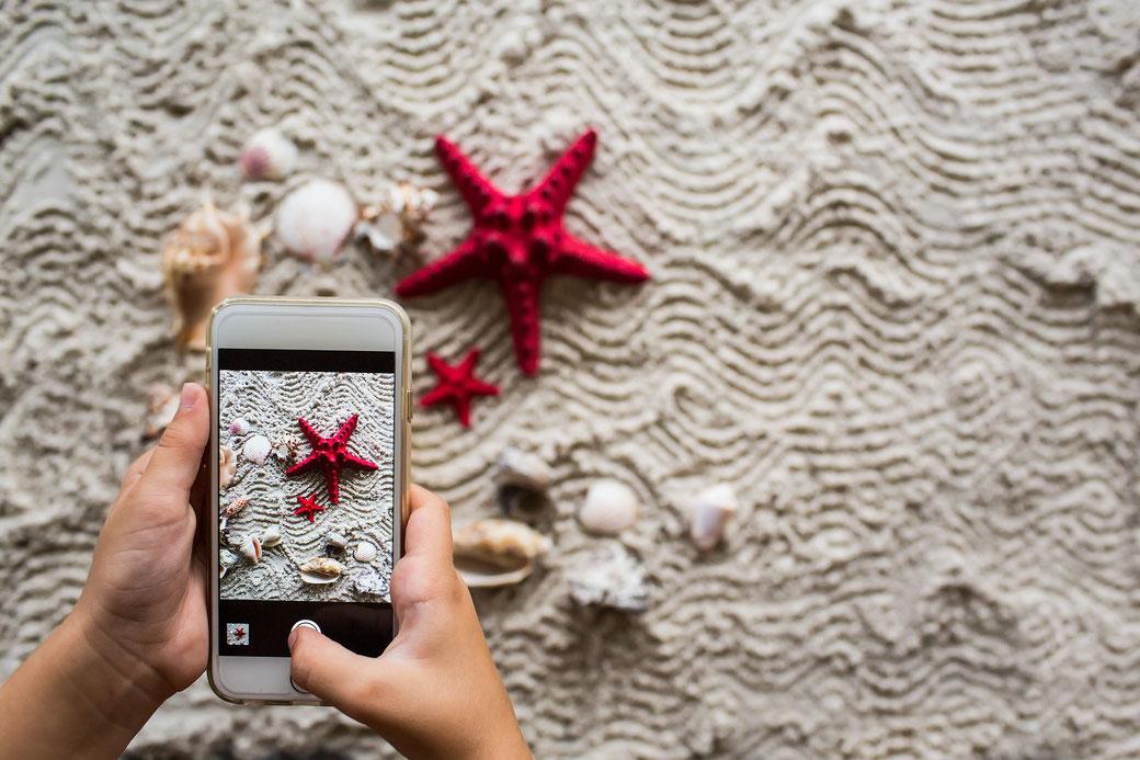 Téléphone prenant en photo une étoile de mer