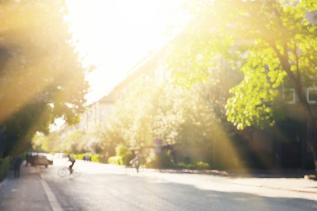 Bild von einer Straße - von Sonne durchflutet, von Natur umsäumt.