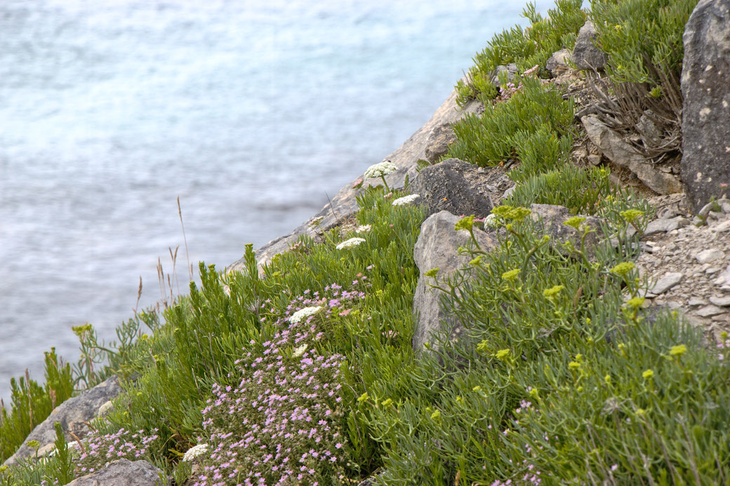 Seafront Quarry Outfit with Spirit of lunar and Crisiswear - rocks and plants - Zebraspider Eco Anti-Fashion