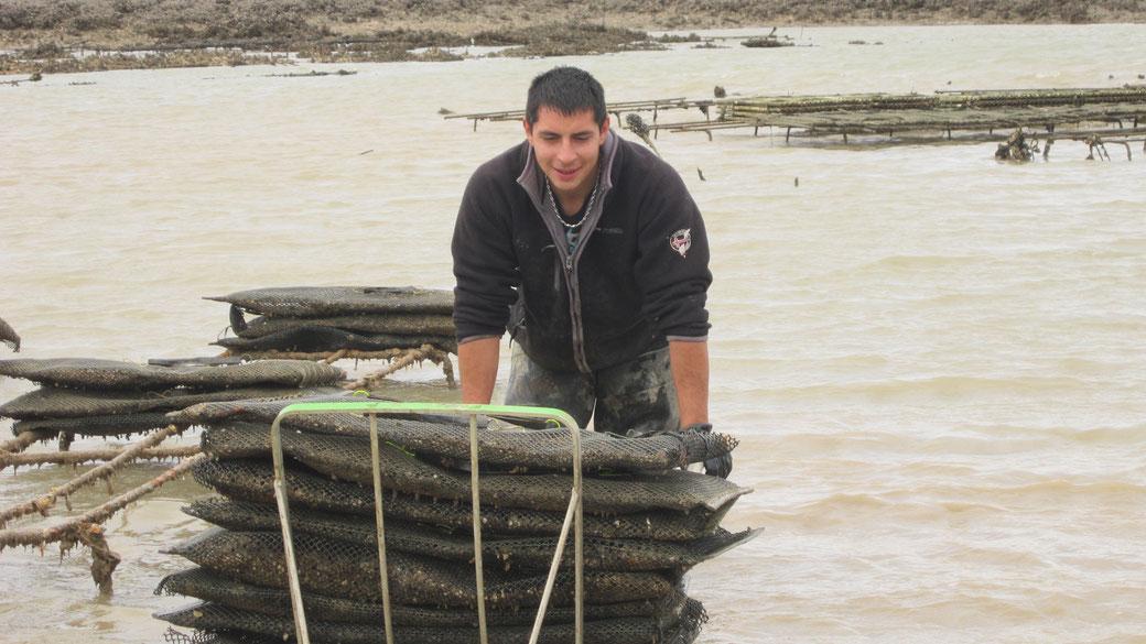 Auréliano Moissenot sur les parcs à huîtres situés devant l'île Madame
