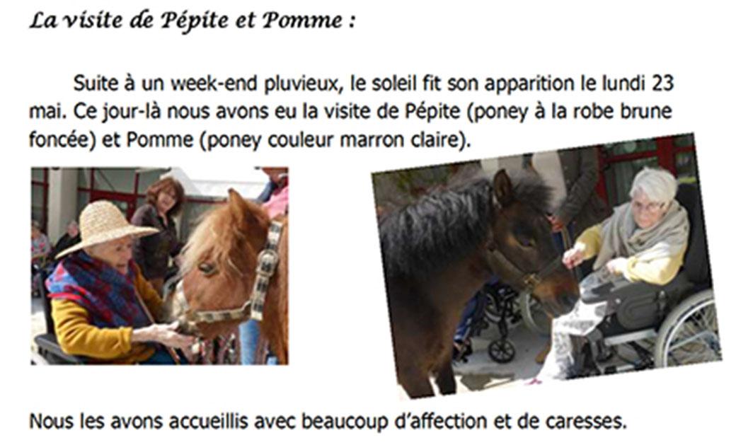 Thérapie avec le poney dans une EHPAD.