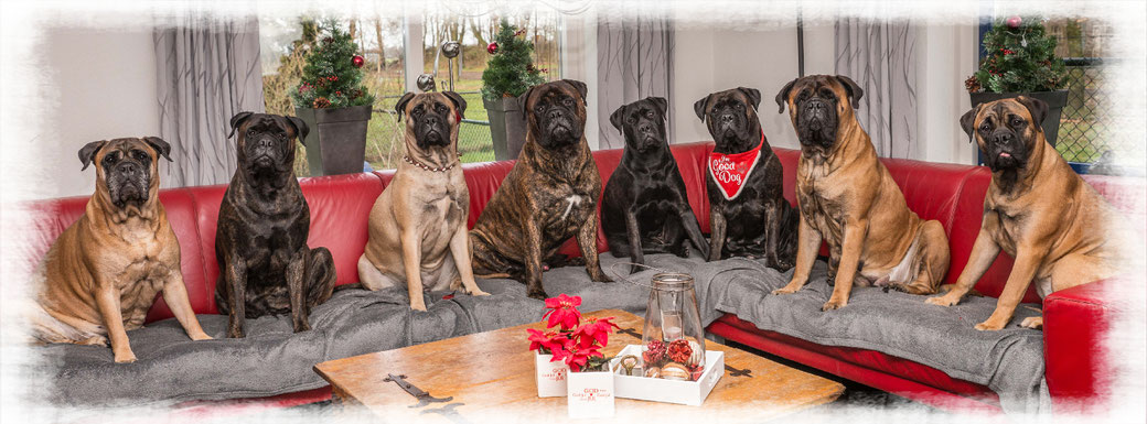 Roos, Blacky, Summer, Sjors, Saartje, Doris, Neeltje en Caro (december 2019)