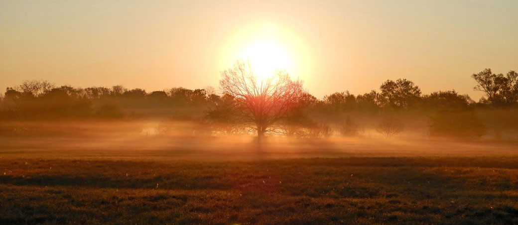 Sonnenaufgang bei Taubergiessen