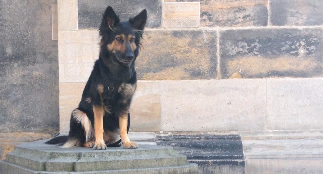 Ein Hund sitzt in Konzentration auf einem Steinsockel.