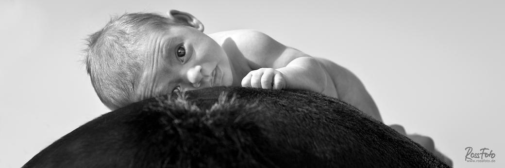 RossFoto Dana Krimmling, Pferdefotografie, Baby, Neugeborenes, Pferderücken,