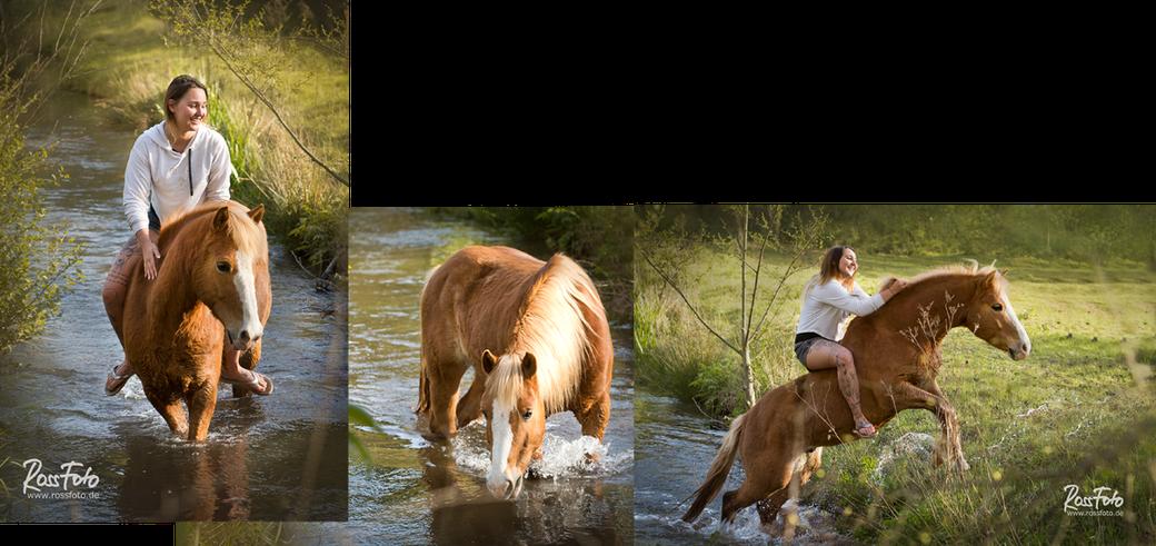 RossFoto; Pferdefotografie; Dana Krimmling; Spaß mit Pferd im Wasser; Westernreiten; wanderreiten; freizeitreiten; Reiten im Sommer