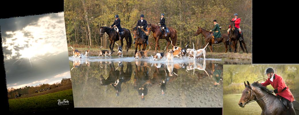 Elsässer Schleppjagd Haras de la Nee; Rossfoto Dana Krimmling; Jagdreiten; Schleppjagd; Badische Dragoner Meute; Jagdhunde; Meutehunde; Foxhounds; Estelle Hoffarth; Gerard Hoffarth