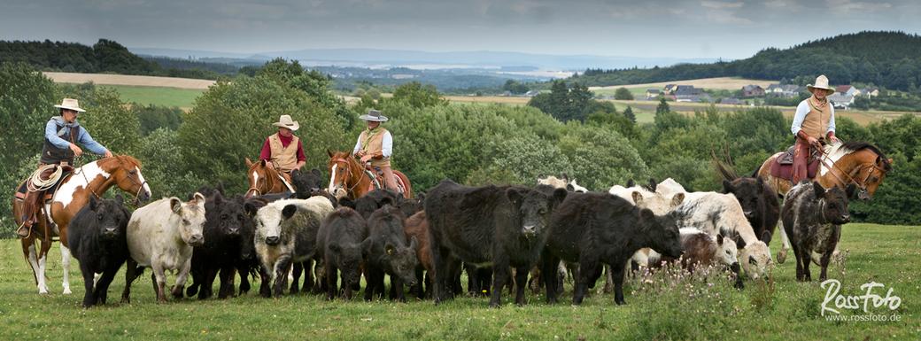 Ranch Roping; Viehtrieb; RossFoto Dana Krimmling; Cowboy; Vaquero; Rinder; Quarterhorse; Quarter; Rope; Lasso, Piets Adventure Trails