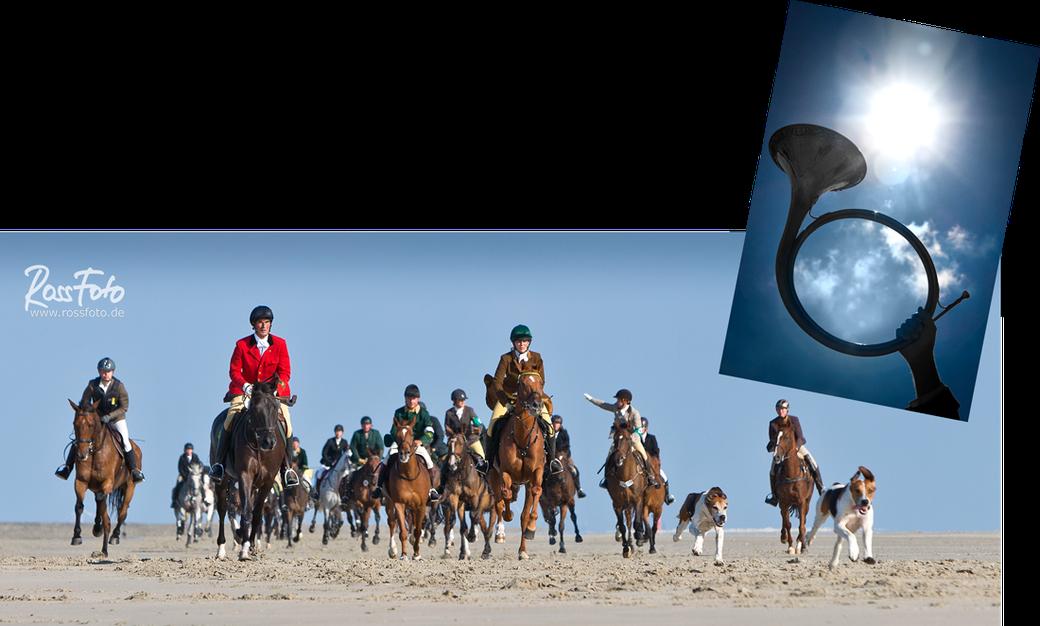 Jagdreitertage Norderney 2016; RossFoto Dana Krimmling; Pferdefotografie; Jagdreiten; Jagdpferd; Niedersachsenmeute; Verdener Schleppjagdverein, Schleppjagd; Reiten am Meer; Reiten im Wasser; Hundemeute; Jagdhunde; Reiten am Strand