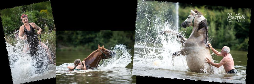 RossFoto Dana Krimmling; Pferdefotografie; Pferd badet im See; Schwimmen mit Pferd; Pferd taucht; Wanderreiten; Reiten im Sommer, Pferd schwimmt