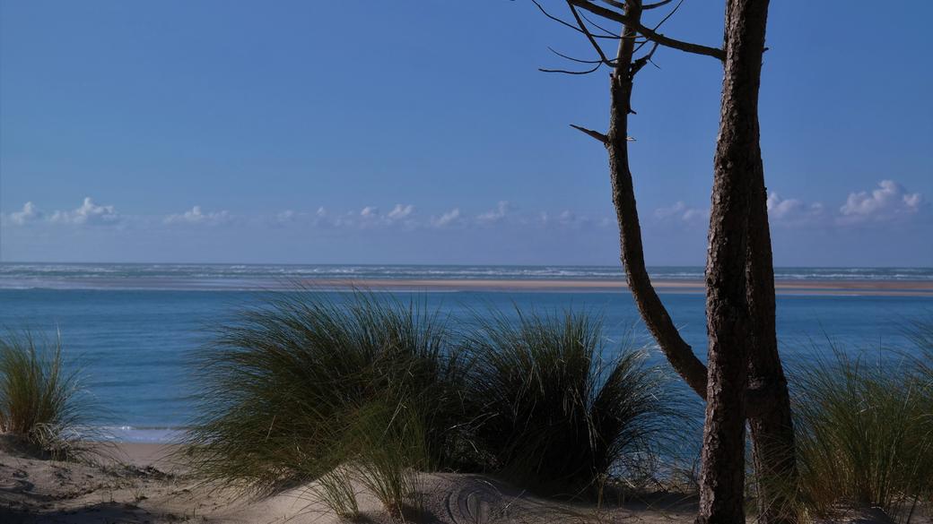 photo dune, océan atlantique, pins, côte landaise