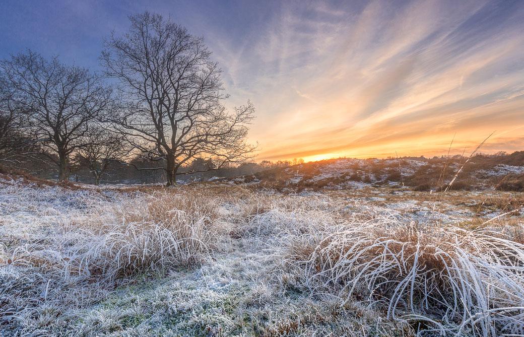 Winterlandschap Gasterse Duinen in Drenthe